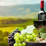 Что стоит знать об итальянских винах превью